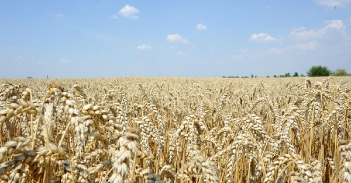 A fost aprobat Manualul de gradare pentru semințele de consum